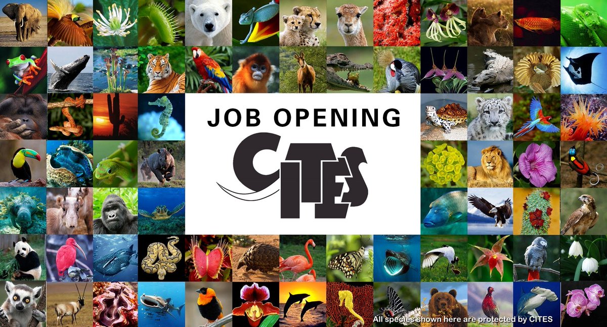 Vacancy: we are looking for a Marine Species Trade Specialist to join the CITES Secretariat. Apply online by February 6: bit.ly/2S4AI4X