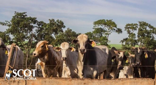 No mercado do #boigordo, a queda registrada no fechamento do dia anterior afastou os pecuaristas e o volume de negócios foi baixo. https://bit.ly/2U8gutK  #pecuáriadecorte #gado #mercadodoboi #agronegócio #produtorrural #fazenda #rural #campo #Mercado #agropecuária #carnebovinapic.twitter.com/ilzTalz80E
