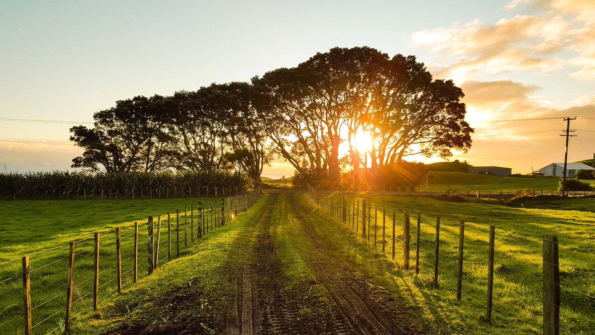 #purins En el següent enllaç de la web d'@agriculturacat s'informa de les zones vulnerables en relació amb la contaminació de nitrats que procedeixen de fonts agràries i de gestió de les dejeccions ramaderes: https://t.co/rNW5or9NsA Tens una granja? Informa't! #sostenibilitat https://t.co/z1YVFvIjB7