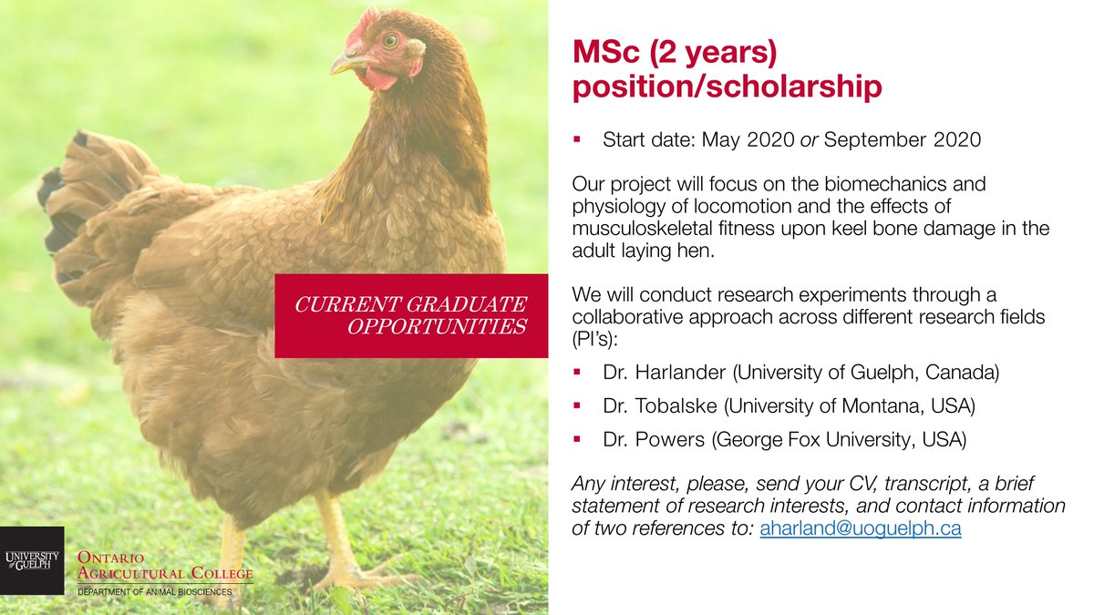 Interested in poultry behavior and welfare research? A collaborative MSc position is available with ABSc and @CCSAW_UofG Prof. Alexandra Harlander. See below for more details! https://t.co/LzMwscNb4t