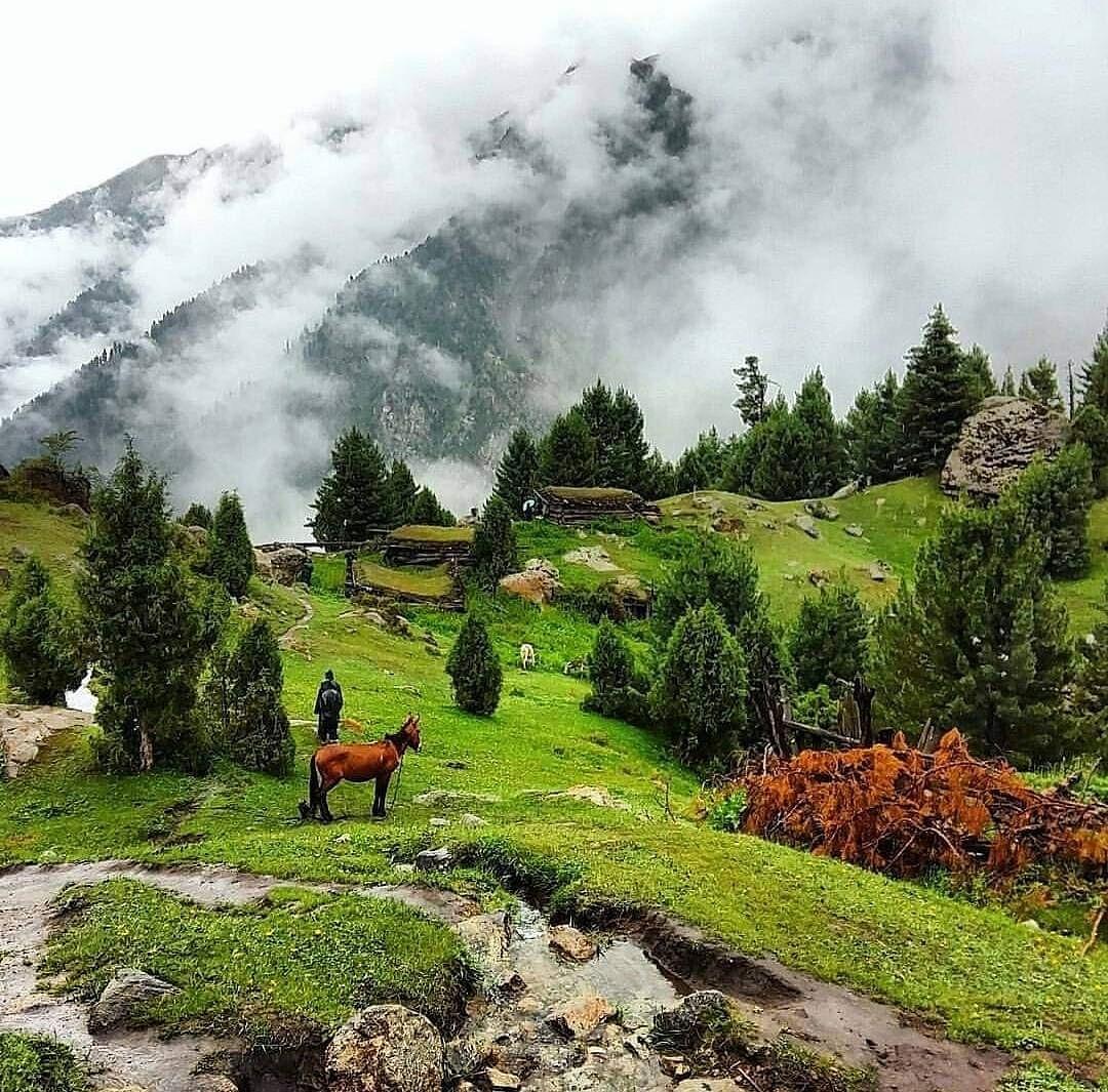 Fairy meadows,Gilgit Baltistan,Pakistan💚 The Land of hospitality❤ #fairymeadows #nangaparbat #gilgitbaltistan #killermountain #hunzavalley #seemypakistan #beautyofpakistan https://t.co/MJpKLQMZIP