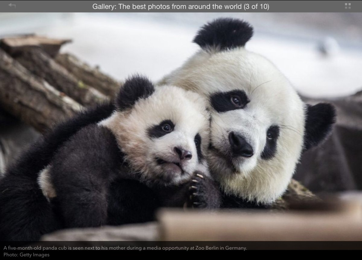 Pandas in the paper this morning.