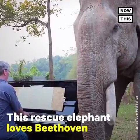 This pianist plays Beethoven for rescue elephants 🐘 https://t.co/trHaWQ556G