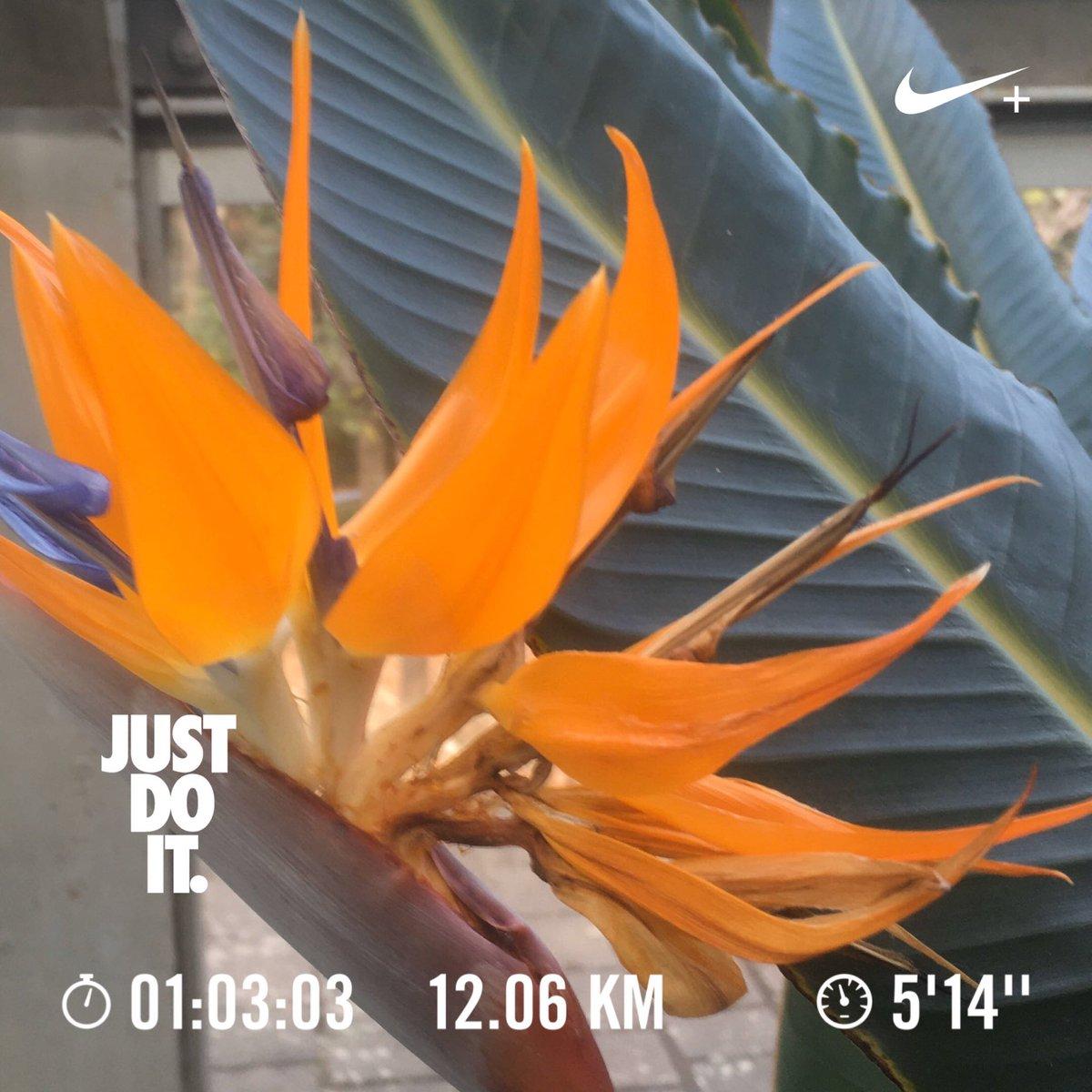 Have a nice day☀️ & nice running! 👟 Today's 🏃♂️:12.1km  Feb..Σ12.1km Today's 📷:My Conservatory Tokyo 🇯🇵 🏃♂️➡️ #NRC #JustDoIt #nikeplus #run #朝ラン #ランニング #runner #UniverseRunners  🌼➡️  #花写真 #花写っと #Flower #ストレチア #極楽鳥花 #Strelitzia #温室
