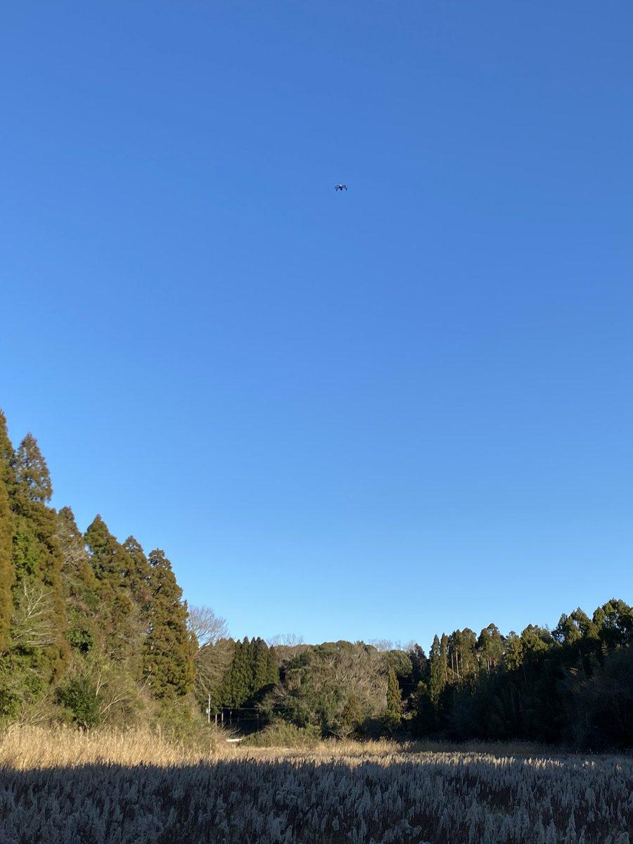 山を買いに来た。めっちゃ山だった。ドローンを飛ばしてみた。青空に映えた。いい休日だ。