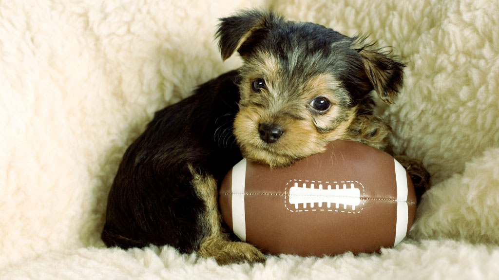 #PuppyBowlXVI WE CAN'T TAKE IT 😍! Tell us: should we invent cuteness insurance just to survive Puppy Bowl XVI?! http://spr.ly/60111gJNJ