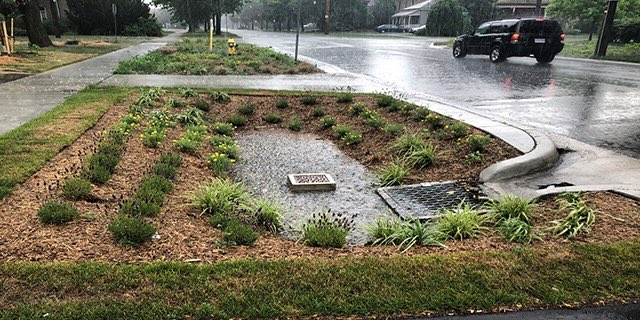 """City of London on Twitter: """"A rain garden is designed to collect rainwater  from roadways and parking lots and limit the amount of water that enters  storm sewers. Compared to a similar"""