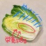 意外と知られていない裏ワザ!白菜は内側から使っていくとより美味しく食べられる!