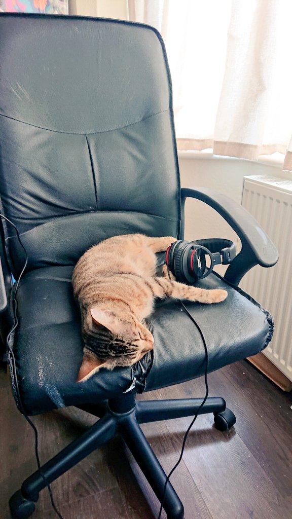 He's been working hard, bless him! #territalks #voiceover #catslifepic.twitter.com/tLWyiYjcsj