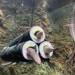 本日2月3日は節分!水族館の「アナゴの恵方巻き水槽」を見て!