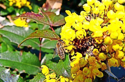 Remstal-Bienenroute: Noch mehr Blüten als zur Gartenschau http://bit.ly/2STnwA3pic.twitter.com/GICXMvvrJM