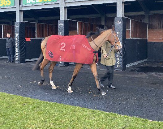 Dartum Tempus declared to run @MusselburghRace and @HamiltonJamie1 takes the ride. Join the club for just £249 a year and enjoy the owners' experience without the on going costs. Please get in touch for full details.  https://t.co/mVTVMpVEHt