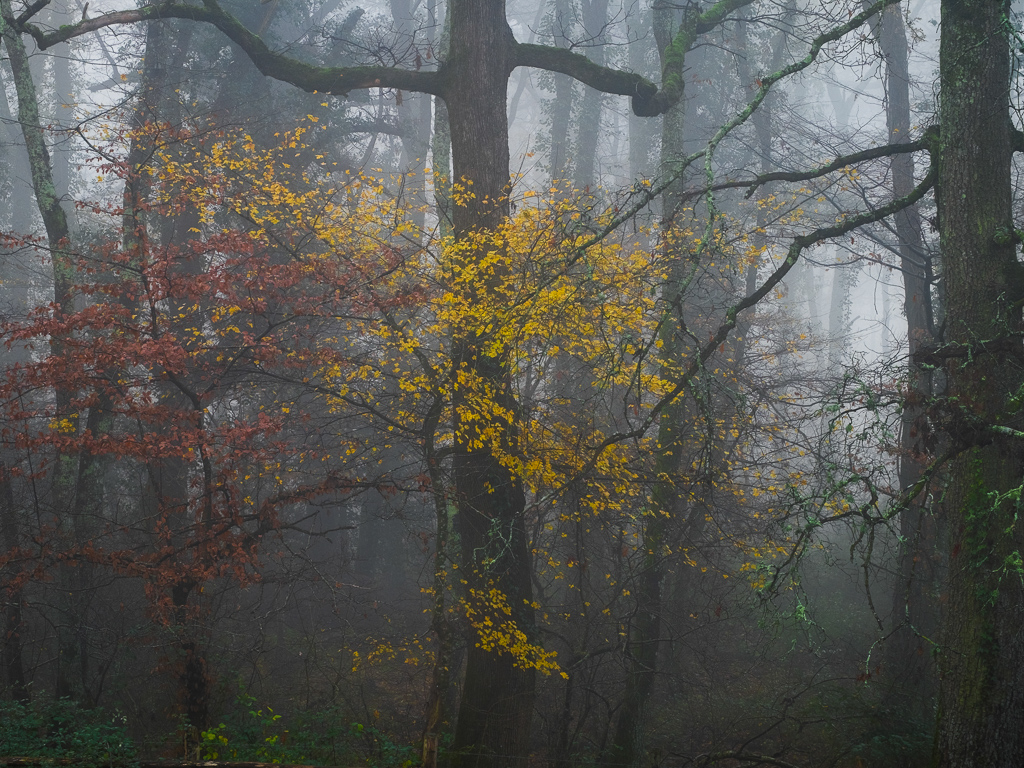 """@bri7979 writes about his project """"Intimate woodland""""  The mornings of winter bring with them the magic of places hidden by a misty layer. https://bit.ly/36T6reB #woodlandphotography #outdoorphotography #landscapephotographypic.twitter.com/X2psiH3aAv"""