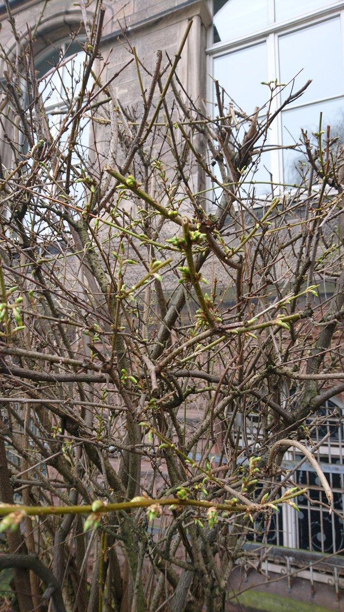 Gerade das erste frische Frühlingsgrün entdeckt. Neubeginn. Irgendwie passend zum Start der Semesterferien, oder? pic.twitter.com/mb7LWC8jze