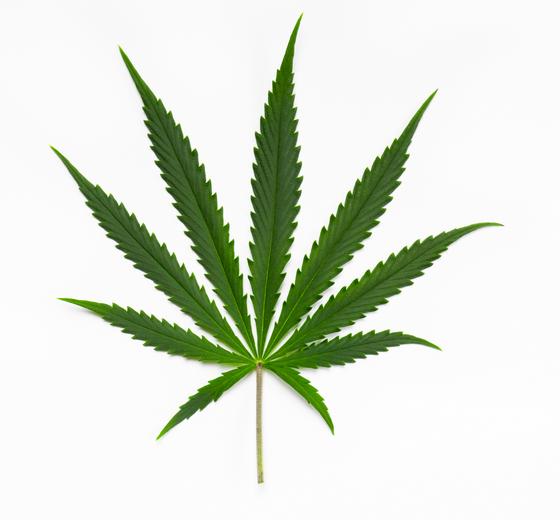 #cannabistötet