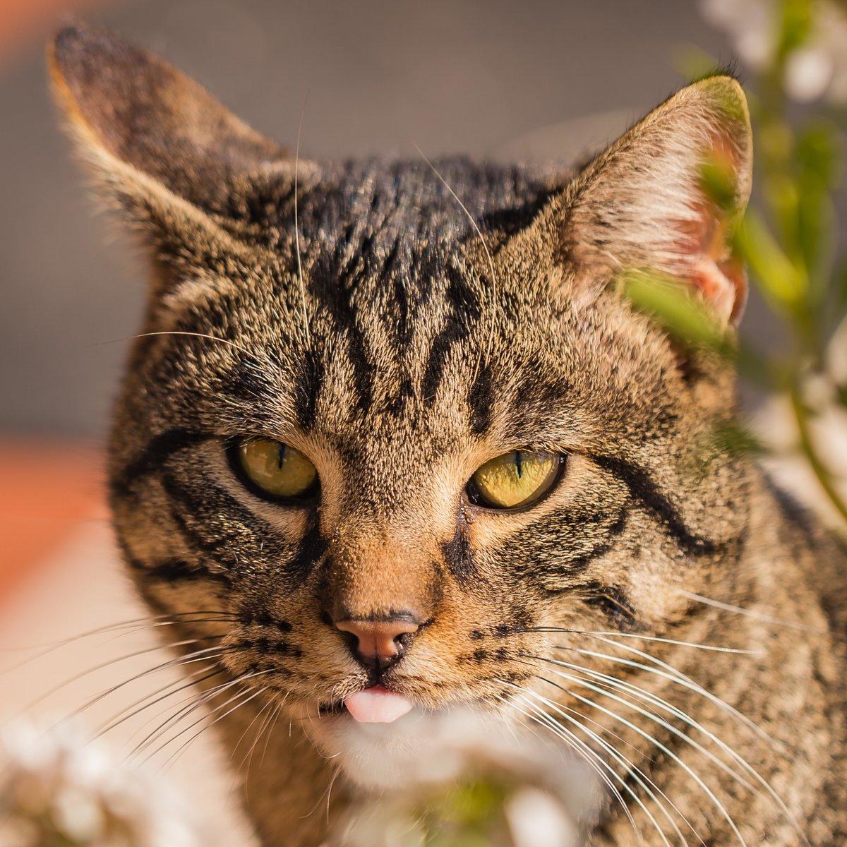 #gatto