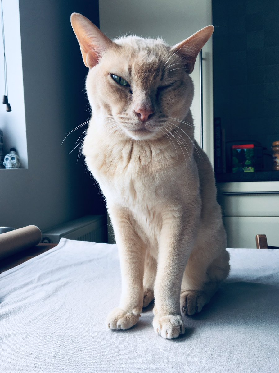 i react this way about my own cat every time i see him. and i work from home. and he's an indoor cat. https://twitter.com/manglewood/status/1228841445869719552…pic.twitter.com/tApSh0NZia