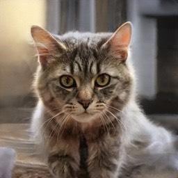 猫ガチャのtwitterイラスト検索結果 古い順