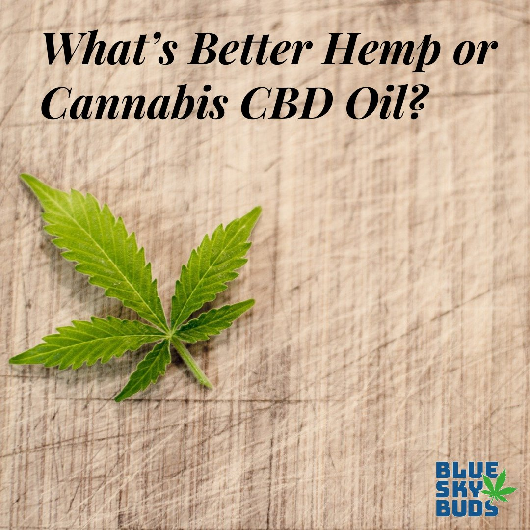 What's Better Hemp or Cannabis CBD Oil?  #cbdhealth cbdhealth #hemp #hemplife #cbd #cbdoil #cbdproducts #cbdgummies #cbdgummybears  #cbdgummy #cbdgummies  #cbdinfused #cbdlove #cbdforanxiety #cbdmedicine #cbdlife  #cbdcommunity #cbdwellness #cbdbenefits #cbdflowers #cbdhemp pic.twitter.com/jpEhs2OA1e