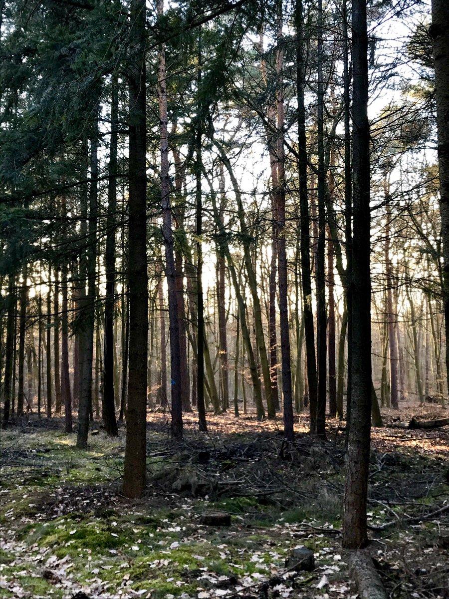 𝐹𝑜𝓁𝑔𝑒  𝒹𝑒𝒾𝓃𝑒𝓃  𝒯𝓇𝒶̈𝓊𝓂𝑒𝓃,  𝓈𝒾𝑒  𝓀𝑒𝓃𝓃𝑒𝓃  𝒹𝑒𝓃  𝒲𝑒𝑔. . . . . . . . . . . #poetry #poesie #poesie #wald #natur #landschaft #träumen #traum #naturliebe #landscape #autorenalltag #bäume #lebedeinentraum pic.twitter.com/dOn0g7wppB
