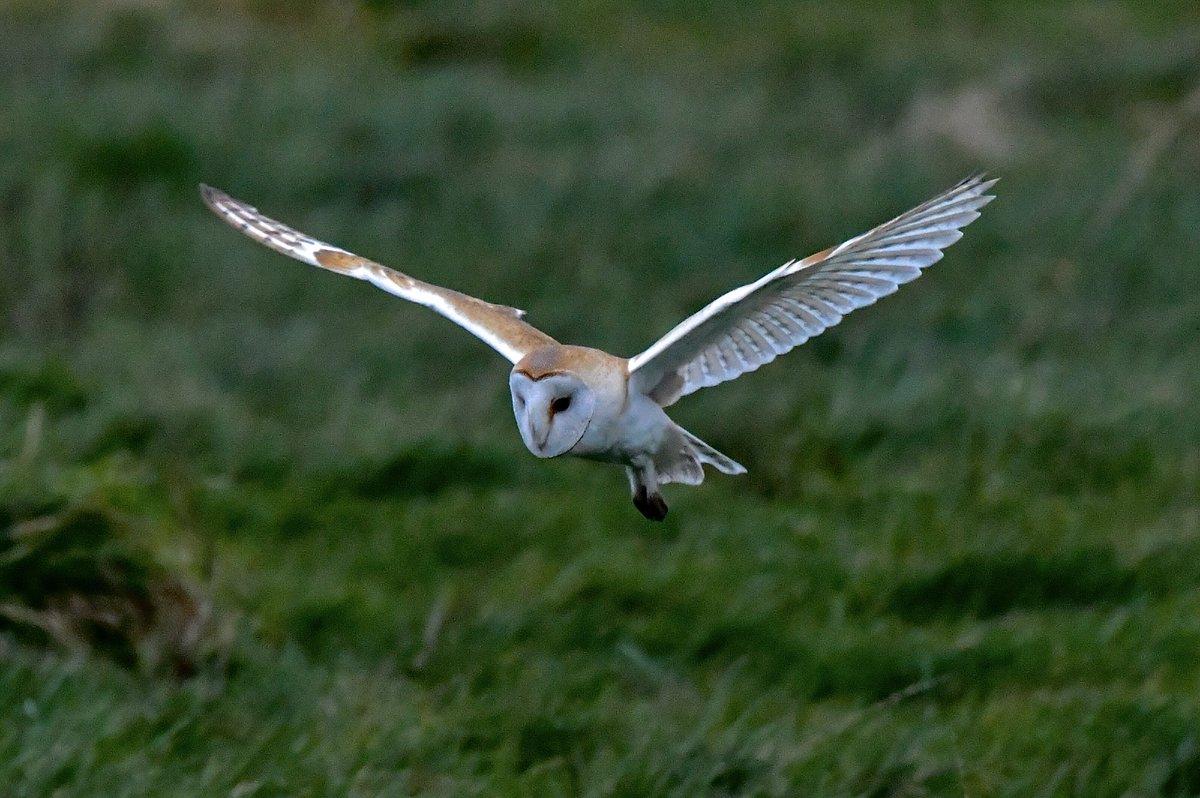 RT @mufc_smith: Calm before the storm @BarnOwlTrust @iNatureUK @_BTO @RSPBNews @RSPBEngland @Natures_Voice @BirdWatchingMag @NatureUK @Lancswildlife @wildlife_uk @CountryfileMag