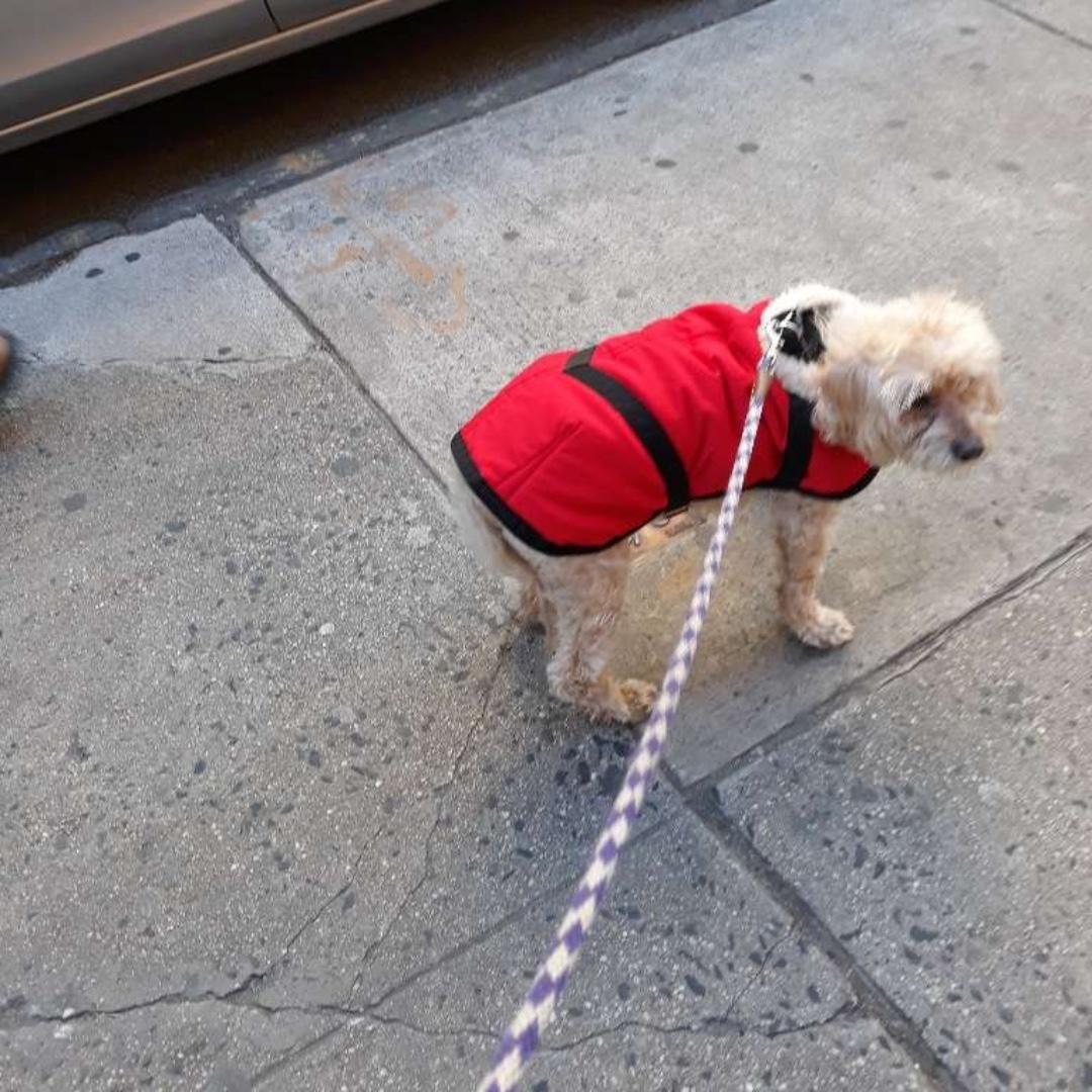 Joey wishes you a happy end of the day! #seniordog #maythepawsbewithyou #lukedogwalker #dogwalkeruws #happydog #uws #doggy #doggo #furbaby #dogcity  #puppy #puppylover #ilovedogs #sweet #whatabeauty #nycitydog #sweetdoggo #endoftheday #cutedog #cutepic #dogsofinstagrampic.twitter.com/QdeOIvOZpE