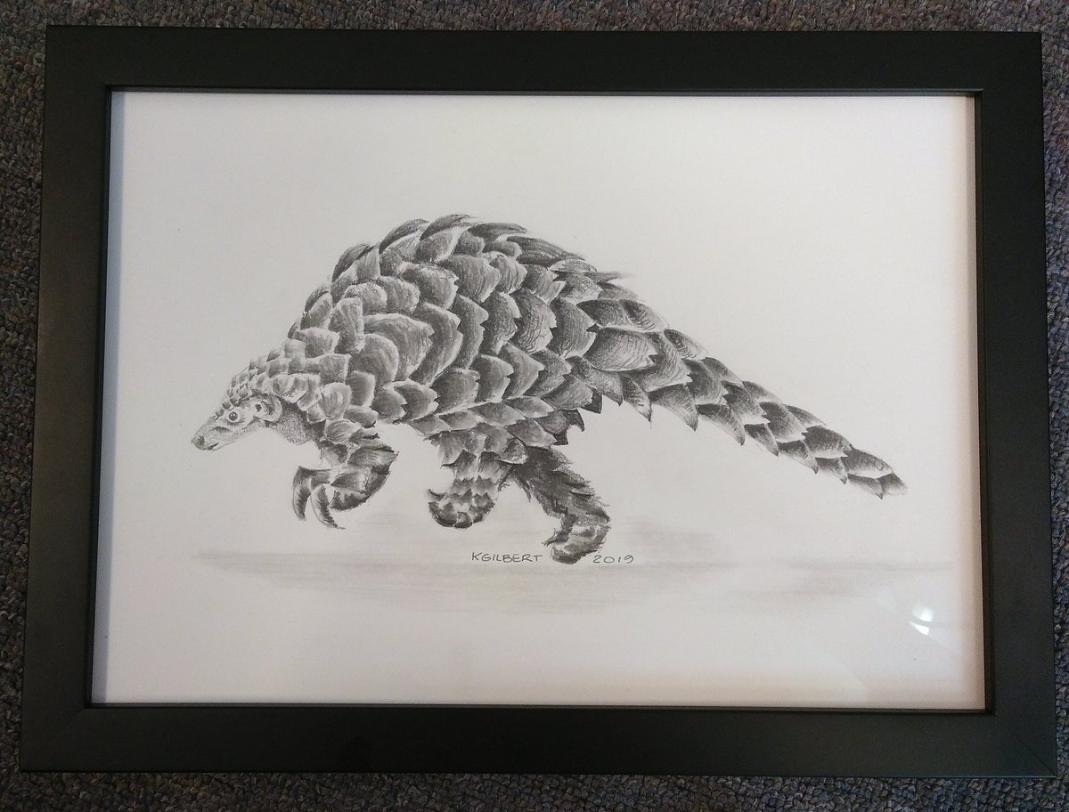 It's #WorldPangolinDay today! I'm celebrating by putting up this amazing artwork that was given to me by @InvasionEcology and the labgroup. #PerfectGift (Drawing by K.Gilbert)