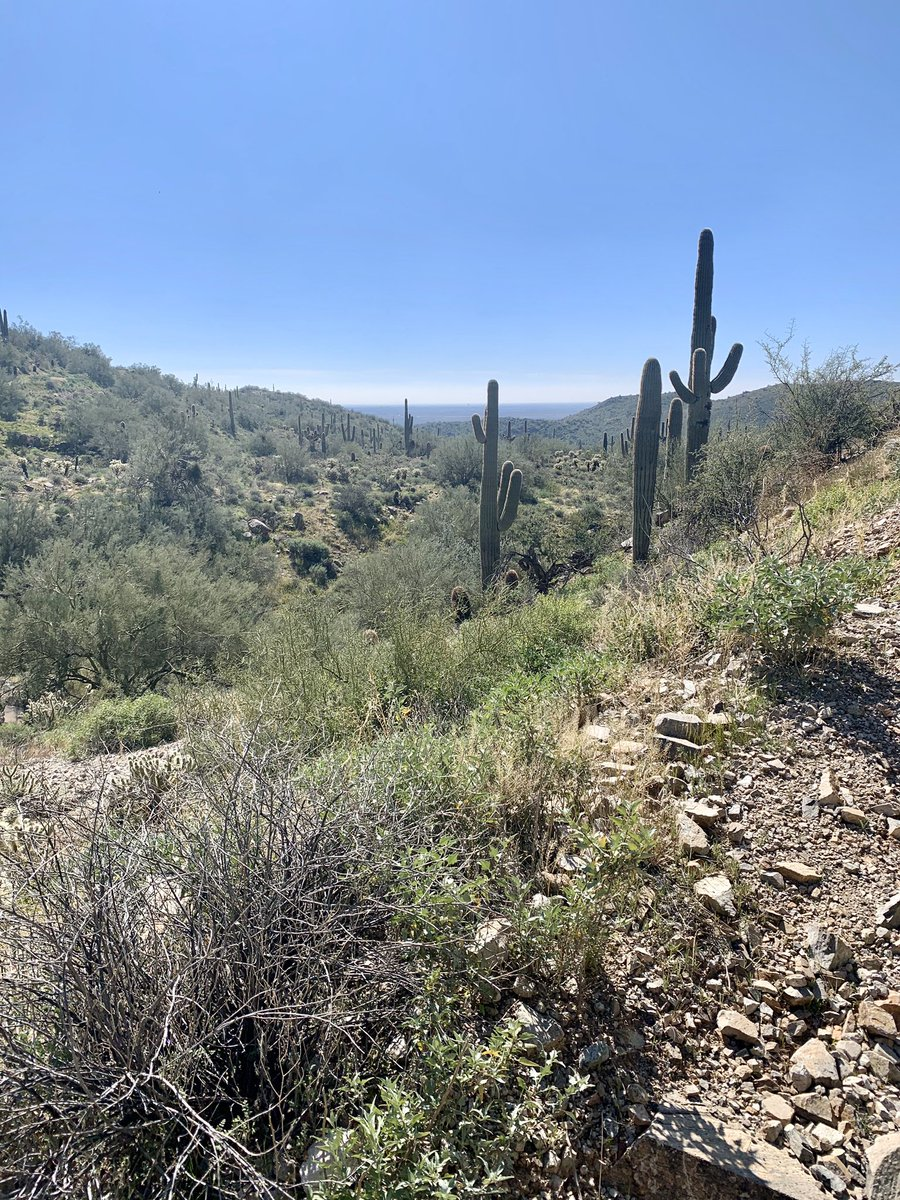 We've lived in #Arizona for almost a year and it's still hard to believe we're only a few minutes away from views like these. #azliving #scottsdale #desert #azhikingpic.twitter.com/Y77y8v7a3A