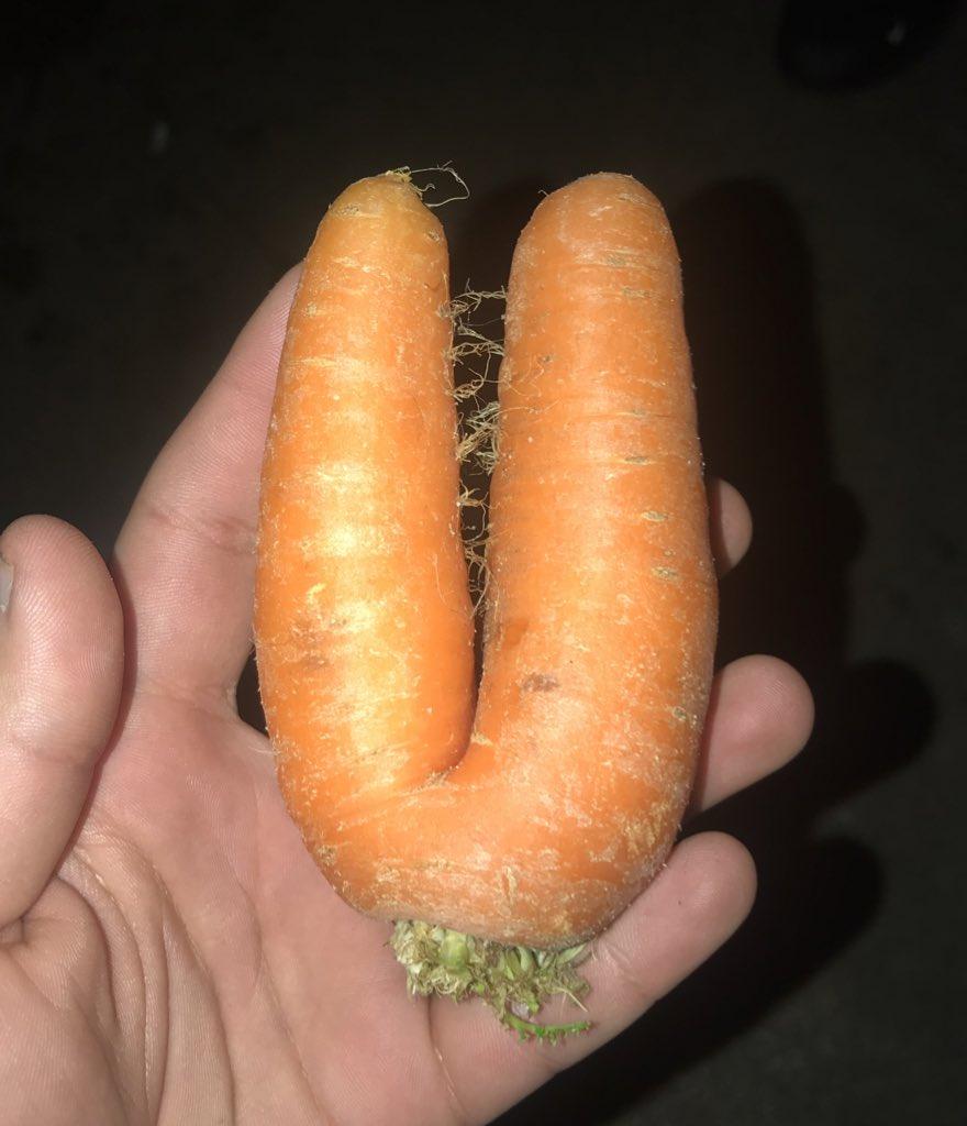 Replying to @Maurofilipe13: Esta é a cenoura da sorte! Rtt ou tens 7 anos de azar!