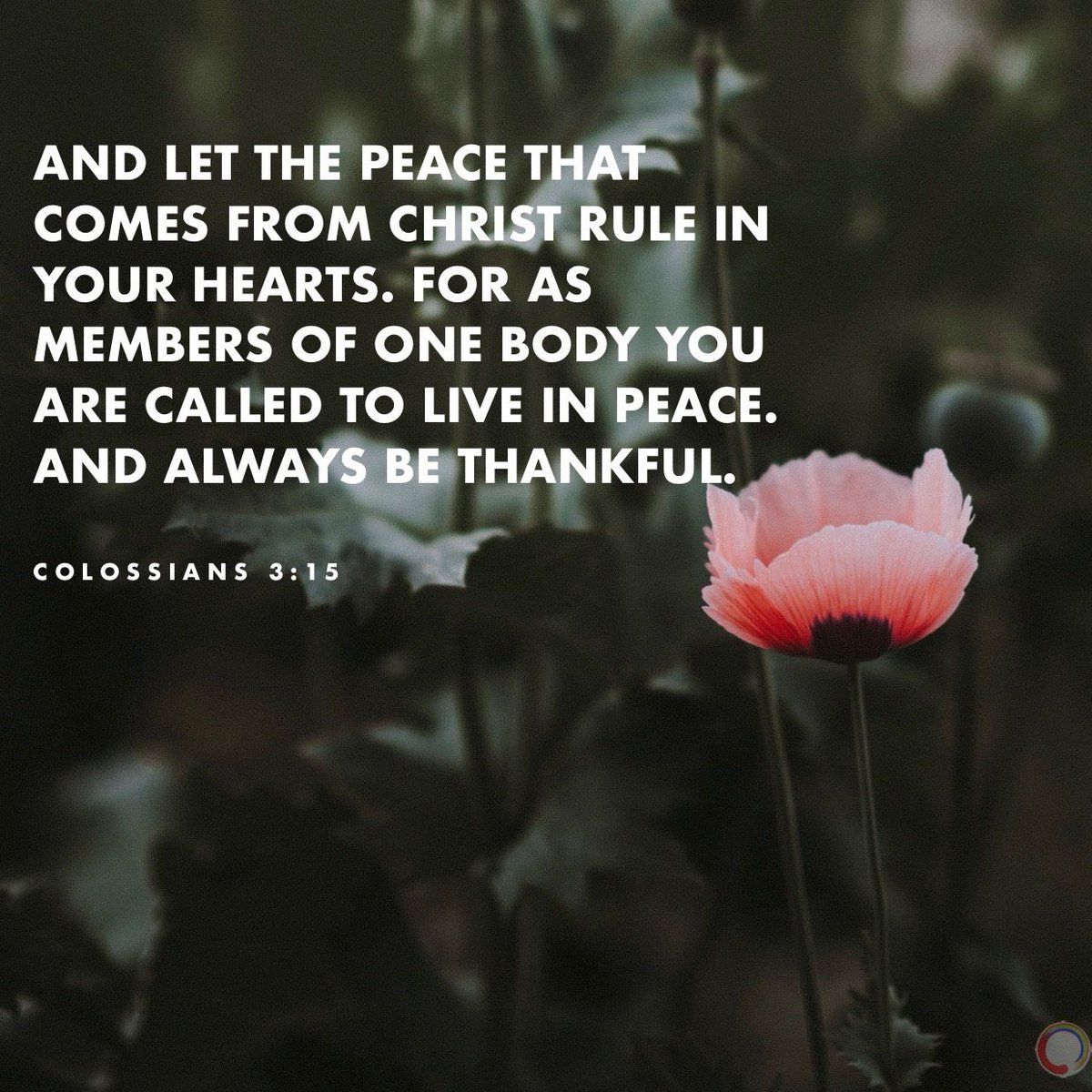 """""""And let the peace that comes from Christ rule in your hearts."""" ~ Colossians 3:15 . . . #VOTD #VerseOfTheDay #Colossians #TheBible #Scripture #WordOfGod #WordOfGodSpeak #EveryWord #JesusIsKing #Jesus #Peace #Christ #Thankfulpic.twitter.com/Idd6koymDJ"""