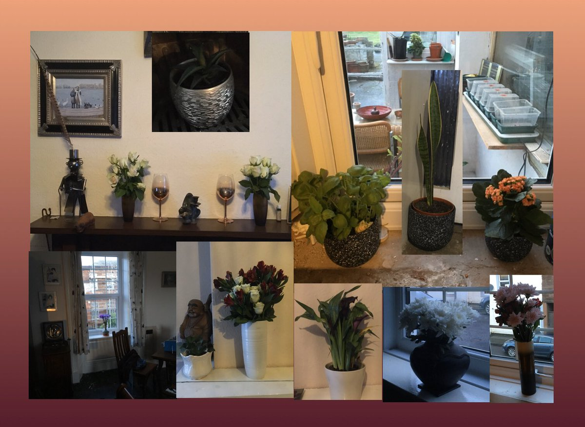 #Flowers and plants #Plants and flowers Keep you smiling for hours and hours With new windows came new views Then new #vases in more than ones and twos! #Wondering what was best about our little shopping splurge? We did not quite complete it! So now we have the urge To find #more