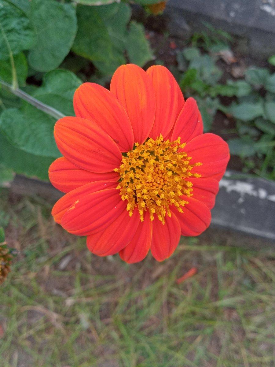 #photography #smartphonephotography #Philippines  #flowerpic.twitter.com/ndNsTQEb0U