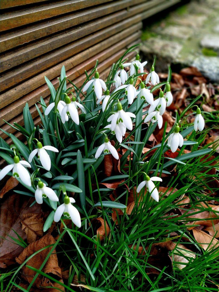 Der Garten wird weiß #nature #naturephotography #flowers #smartphonephotography #handyfoto #photography #fotografiepic.twitter.com/e3kta0Ckpo