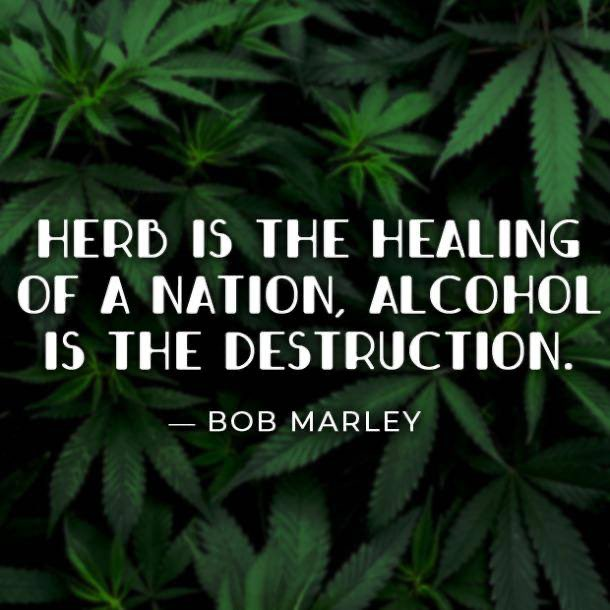 Words from the great #bobmarley . . . #hemp #hempflower #hemplife #hempcommunity #hempfarmers #hempoil #hempproducts #hempseeds #hempheals #hempclothing #hempcrete #hempfarming #hempindustry #hempfarm #hemper #hemphelps #hempbenefits #hemphealspic.twitter.com/LLH3th2QZK