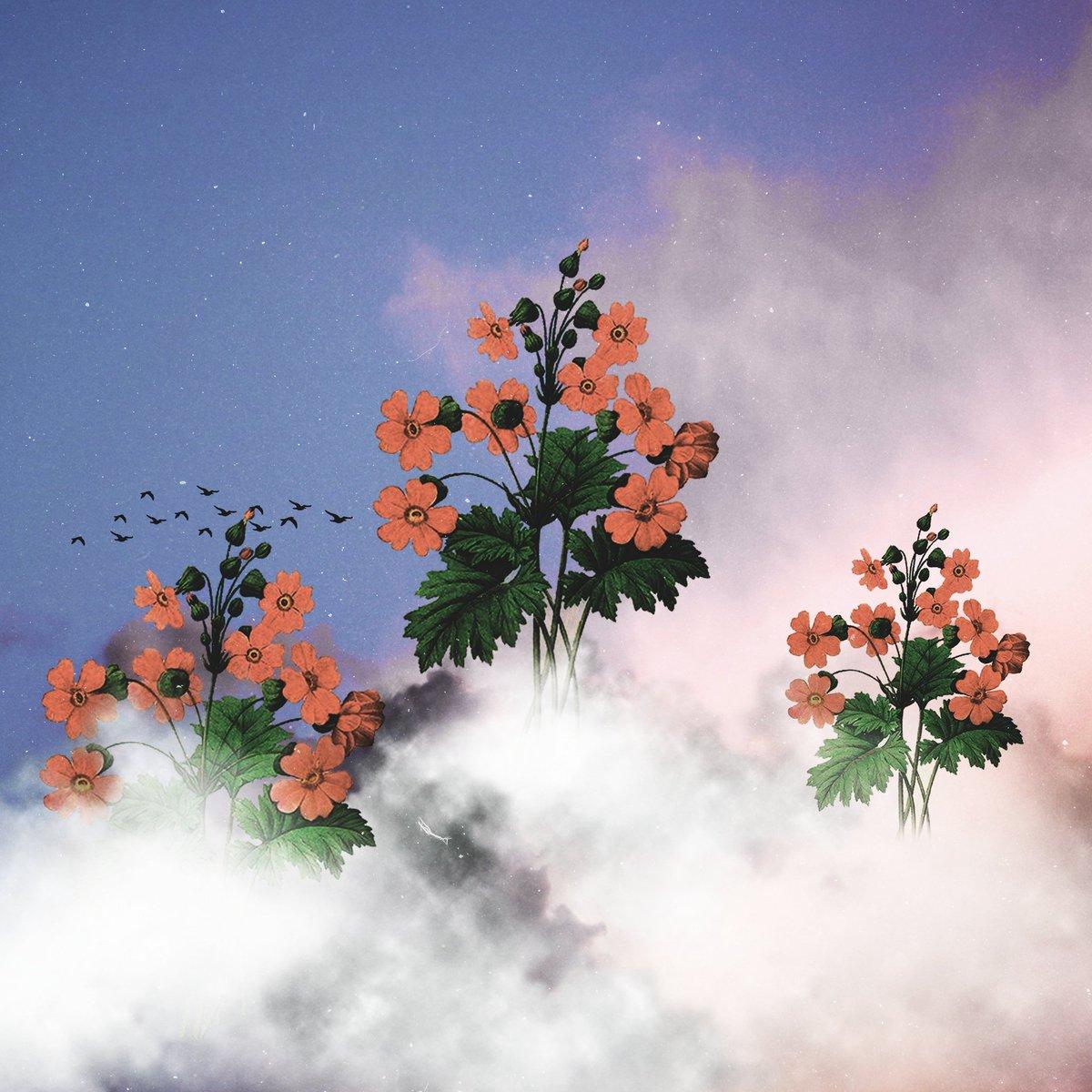 """Bloom"". Made on Photoshop.  #surrealism #surrealistart #graphicsdesign #digitalartpic.twitter.com/U0TQTzpL1F"