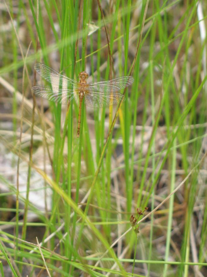 Damselfly vs. Dragonfly #photography #nature #naturephotos #dragonfly #damselfly #Fotografia #写真撮影 #фотография