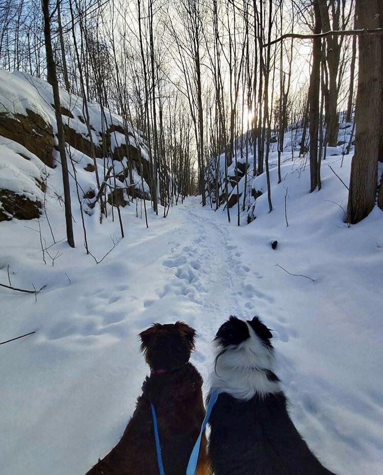 Adventure is calling - get outside & explore! : @canadian_spearo #1000Islands #Gananoque #Travel #Canada #Islandlife #DiscoverON #ExploreCanada #YoursToDiscover #VisitCanada #Ontario #BestOfOntario #OntarioTravel #LifeOnTheRiver #Wander #GetOutside #Winter #Hikingpic.twitter.com/SLVl9hjEfy