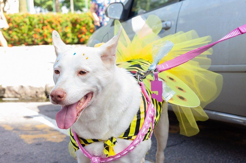 Carnaval pet terá bloquinhos para humanos e cães pelo Brasil | #CarnaPan https://buff.ly/31U3HNj