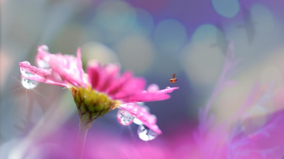 """""""Das höchste Gut ist die Harmonie der Seele mit sich selbst."""" - Lucius Annaeus Seneca  #SoSein #mindset #Wertschätzung #Selbstliebe #Gedanken #Loslassen #LeichtigkeitdesSeins #KörperGeistSeele #Liebe #Herz #tudirwasGutes #Achtsamkeit #Motivation #Inspiration #Spiritualitätpic.twitter.com/iCEdK61y6v"""