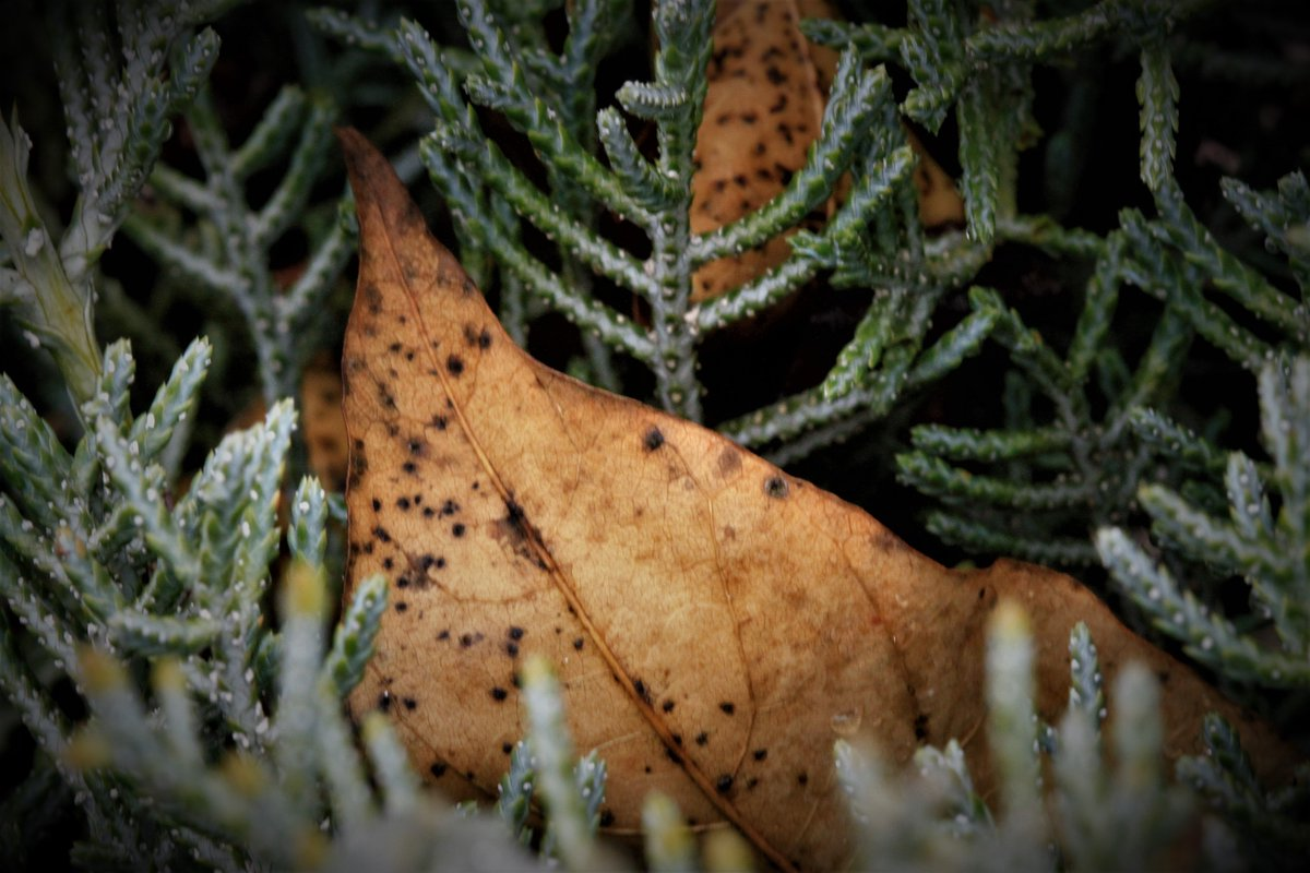#Photographylovers #Nature #Dslrtr #canonturkiye #Photographers  #instagood  #Outdoorphotography #canonstories #canonhikayeleri #Pictureoftheday  #macronature  #macro  #Macrophotography #zamanidurdur #renkritmi  #macro_delight #vizorturk_flower_macro  #supermacro_worldpic.twitter.com/EtFNWoJfFQ
