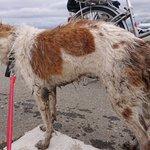 【拡散希望】上三川町石田公園近くで犬を保護・青い首輪・ネームタグなし・メス