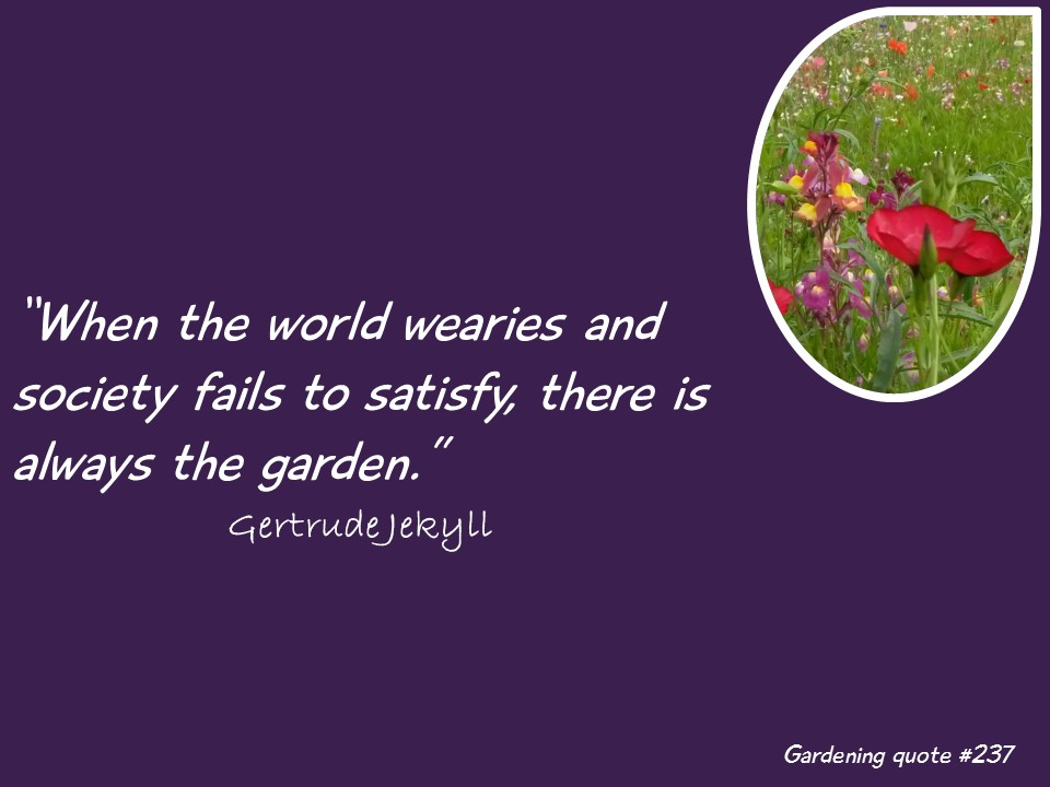 Monday inspiration  #MondayInspiration #Gardeningpic.twitter.com/sgmkePXU5a