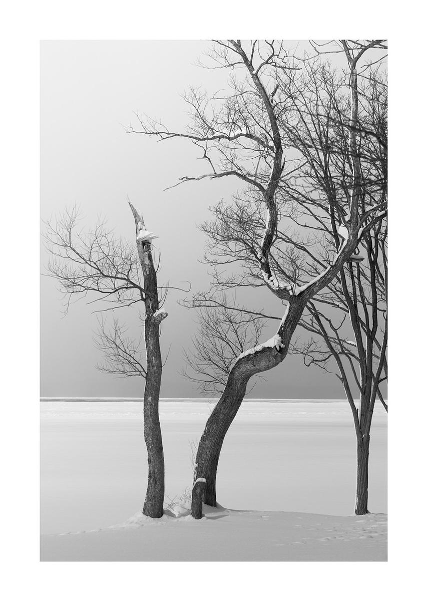 .  Silence.  Life  © Kiyoshi Yamaguchi  #photographyblackandwhite     #KiyoshiYamaguchi . .pic.twitter.com/VwtaHanQav