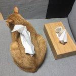 これは違和感なし!ティッシュケースだと思ったら猫だった!