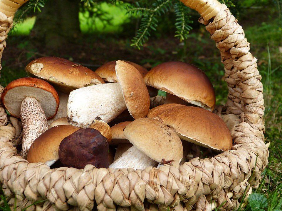 Для женщины грибы к чему сниться собирать