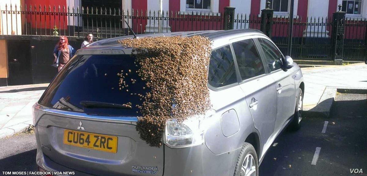 In 2016, a swarm of 20,000 bees followed a car for two days straight because their queen was trapped inside. https://t.co/hKRzVzwghQ