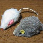 猫用のネズミのおもちゃは死に至るほど危険なものらしい