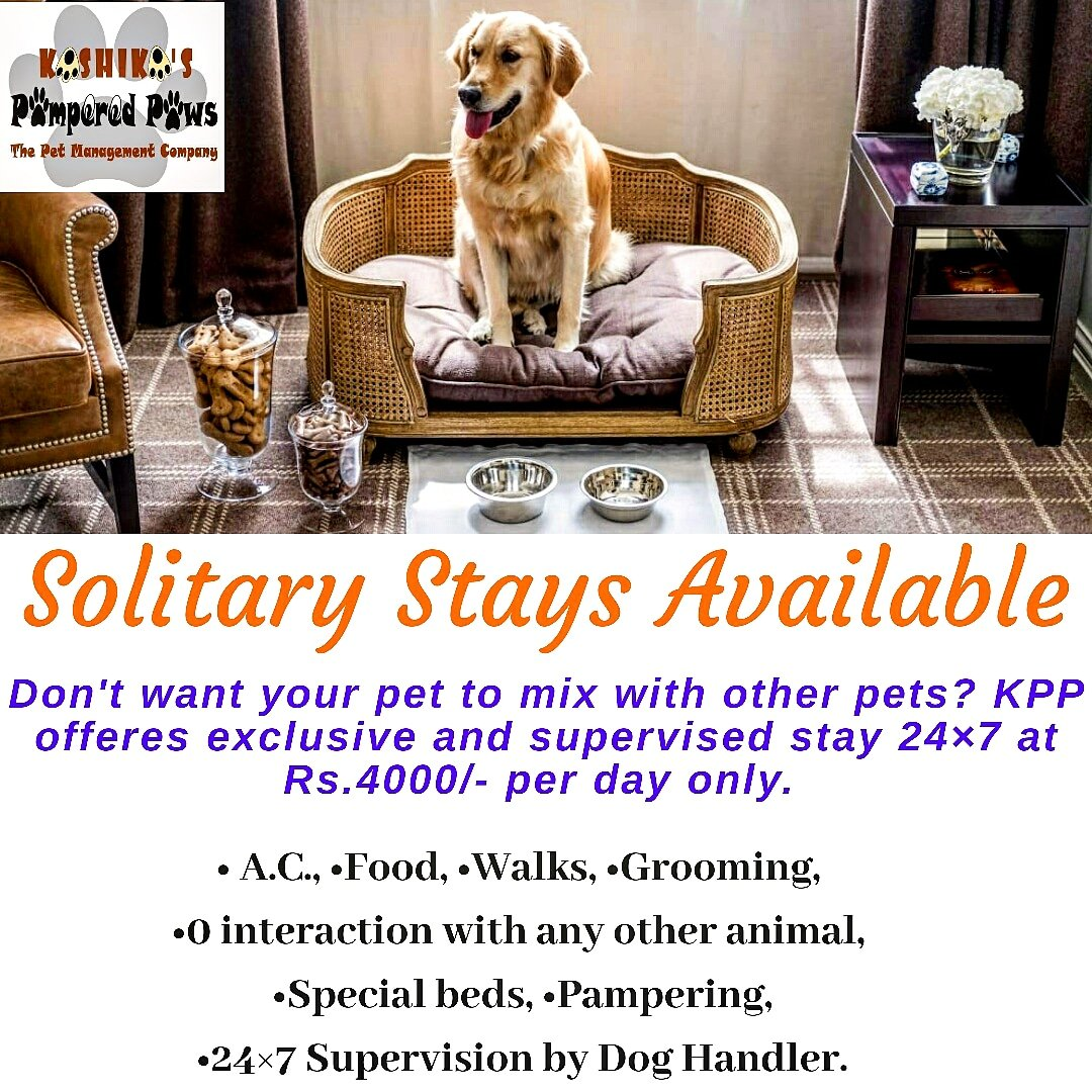 Not all pets have the same requirement. Some don't do well in the company of other animals. No matter what your reason is, we understand you. KPP Pet Hotels offers options for such pets. We guarantee ZERO interaction with other animals. #kashikasppaws #pethotel #biterdogpic.twitter.com/Xo53itP3gj