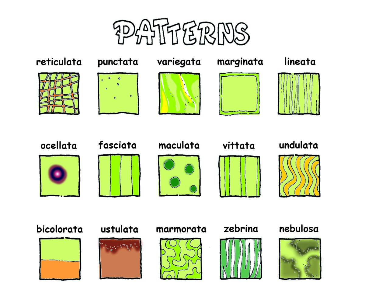 What do these Latin species names mean again? Today: patterns.