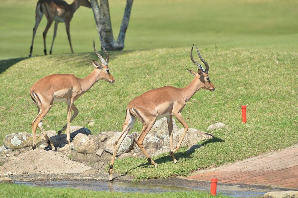 """Résultat de recherche d'images pour """"antilopes de san lameer photos"""""""